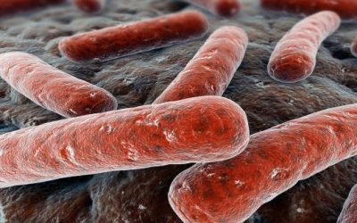 Tuberculosis Day – A Third of the World…